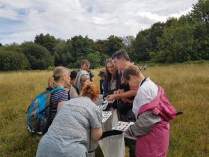 FSC course participants studying flower meadow insects