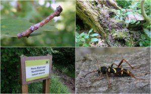 Pavis, Black and Northill Woods